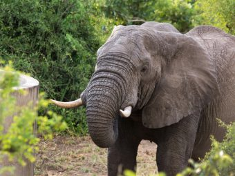 EN: South Africa. Forest plantations and elephants.